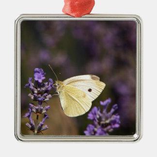 Papillon sur la lavande ornement carré argenté