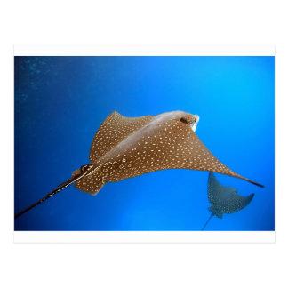Paradis sous-marin repéré de Galapagos d'aigle de Carte Postale