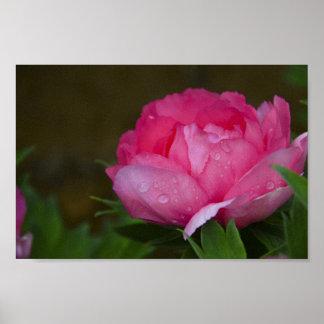 Parc floral de vignes de fleurs de fleurs poster
