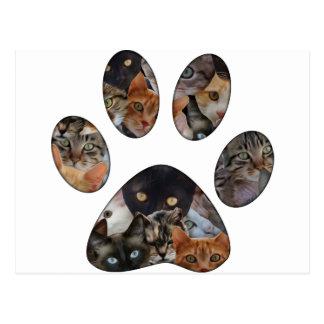 Patte de chats cartes postales