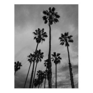 Paumes de B&W Los Angeles Carte Postale
