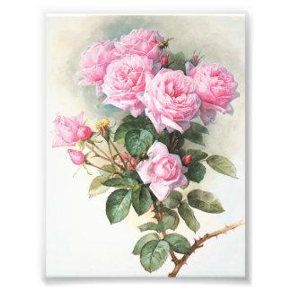 Peinture rose vintage de roses photo