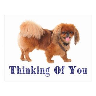 Pensée à vous carte postale de chiot de Pekingese