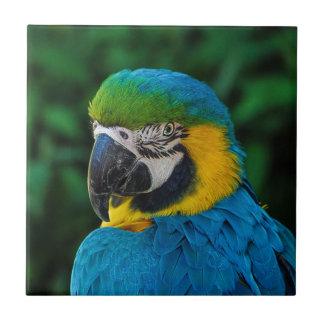 Perroquet bleu et jaune petit carreau carré