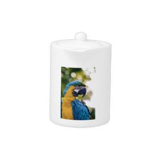 Perroquet bleu jaune d'ara