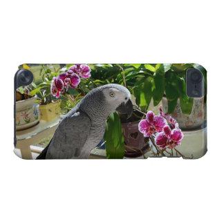 Perroquet de gris africain avec des orchidées coque iPod touch 5G