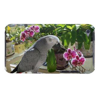 Perroquet de gris africain avec des orchidées coques iPod touch