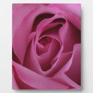 Pétales de rose roses plaque photo