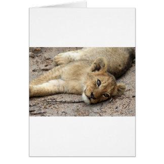 Petit animal de Lazylion Carte