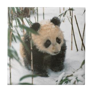 Petit animal de panda sur la neige, Wolong, Petit Carreau Carré