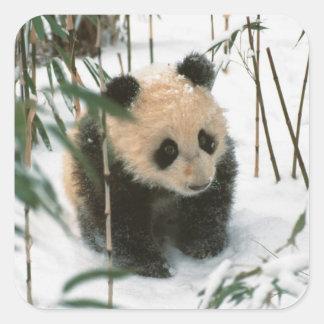 Petit animal de panda sur la neige, Wolong, Sticker Carré
