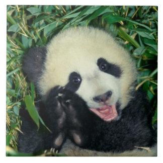 Petit animal de panda, Wolong, Sichuan, Chine Grand Carreau Carré