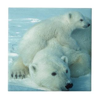 Petit animal d'ours blanc et maman - 2 petit carreau carré