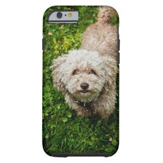 Petit chien regardant l'appareil-photo coque tough iPhone 6