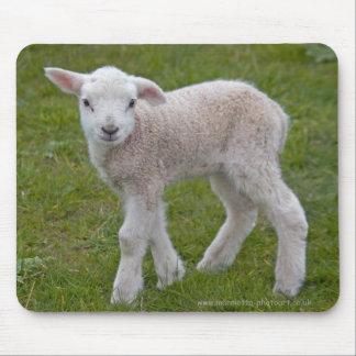 Petit tapis de souris d'agneau