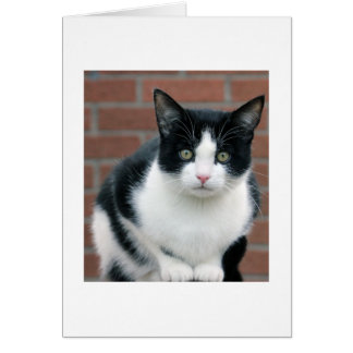 Petite carte noire et blanche de chat