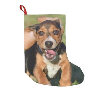 Petite Chaussette De Noël Fonctionnement fou de chiot de beagle