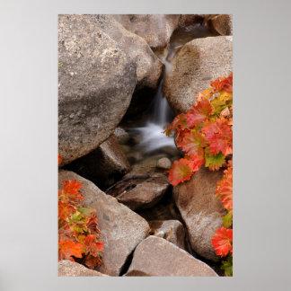 Petite crique en automne, la Californie Poster