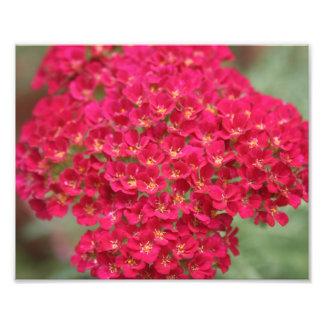 Petites fleurs roses avec la copie jaune de photo