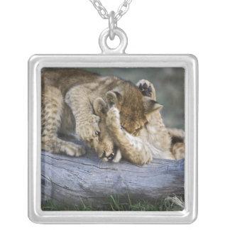 Petits animaux de lion jouant sur le rondin, collier