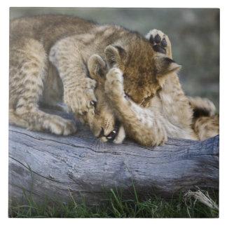Petits animaux de lion jouant sur le rondin, Panth Grand Carreau Carré