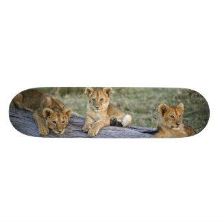 Petits animaux de lion sur le rondin, Panthera Lio Skateboards Personnalisés