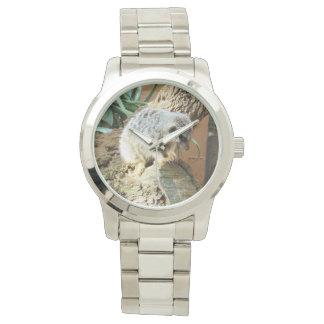 Petits sommes de chat de Meerkat, grande montre