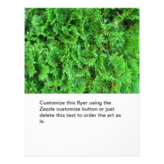 Photo à feuillage persistant colorée verte d'art d prospectus en couleur