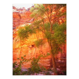 Photo d'arbre de canyon grand
