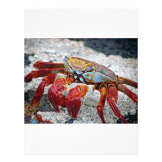 Photo de crabe prospectus en couleur
