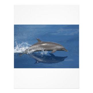 Photo de dauphin prospectus avec motif