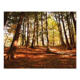 Photo de forêt d'automne