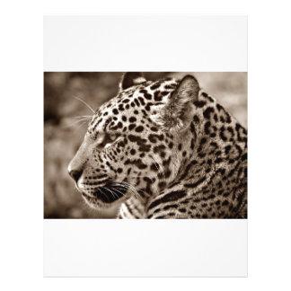 Photo de Jaguar Prospectus