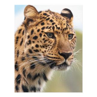 Photo de léopard prospectus