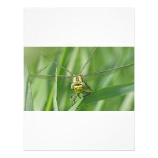 Photo de macro de libellule prospectus