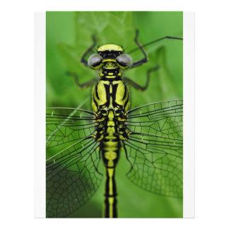 Photo de macro de libellule tract
