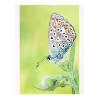 Photo de macro de papillon prospectus