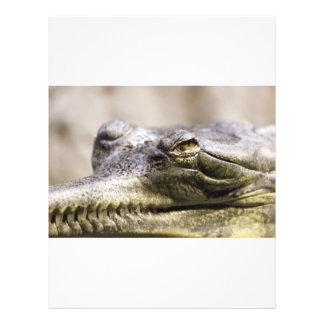 Photo de plan rapproché d'alligator prospectus personnalisés