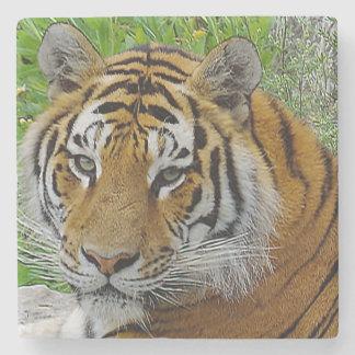 Photo de plan rapproché de tigre sibérien de dessous-de-verre en pierre