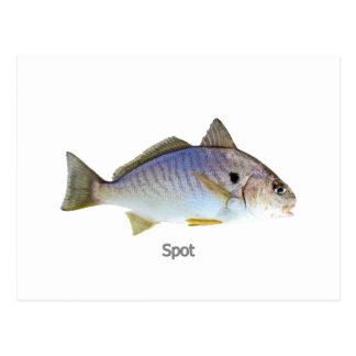 Photo de poissons de tache carte postale