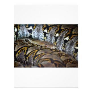 Photo de python tract customisé