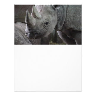Photo de rhinocéros noir prospectus