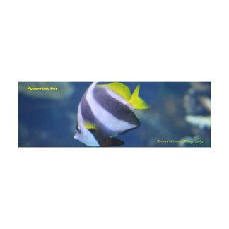 photo de toile enveloppée par poissons maures de