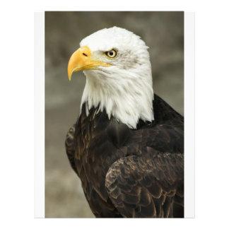 Photo d'Eagle chauve Prospectus