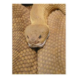 Photo effrayante de serpent à sonnettes prospectus en couleur