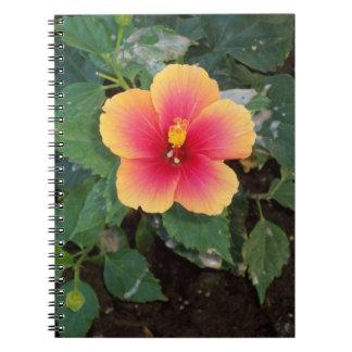 Photo jaune et rose de fleur carnets