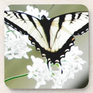 Photo orientale de papillon de machaon de tigre sous-bocks