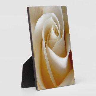 Photo rose de mariage de crème photo sur plaque