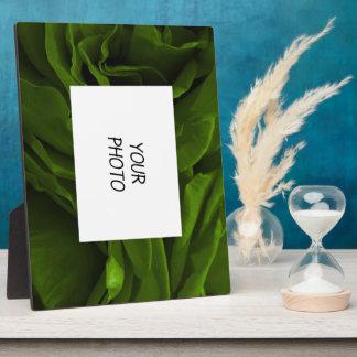 Photo veloutée riche de fleur de roses de vert plaque photo