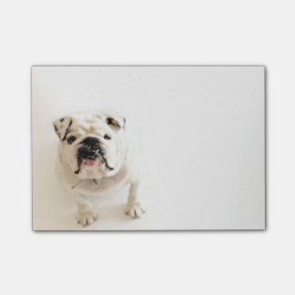 Photographie blanche loyale de bouledogue post-it®
